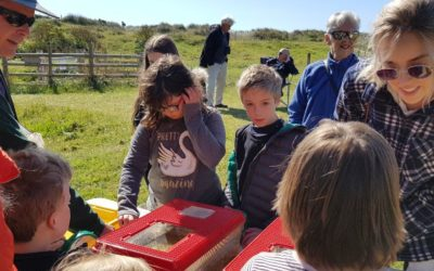 Pond Dipping Dawlish Warren 11th May 2019
